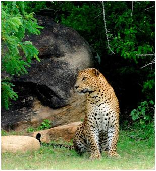 Sri Lanka – Shangri-La Hambantola Resort & Spa suggested destination for adventure tours