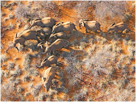 South Africa – De Beers Group to Move 200 Elephants from South Africa to Mozambique