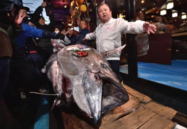 Japan – Bluefin Tuna auctioned for record $1.8 million at Tokyo's New Year Auction